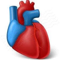 heart_organ